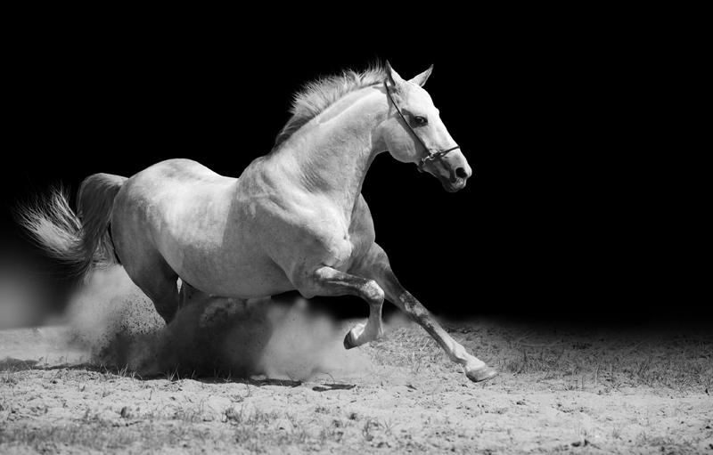 wit paard in volle vaart