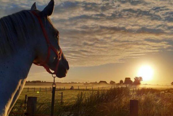 Cloe kijkt naar de zonsondergang